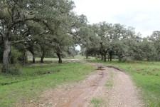 254 +/- Acres    Chicolete Creek Ranch