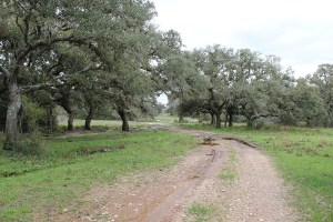 254 +/- Acres    Chicolete Creek Ranch