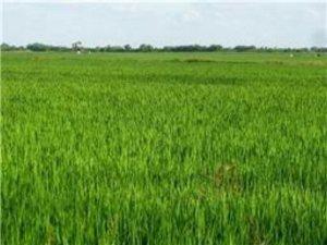 2,160 +/- Acres  Brazoria
