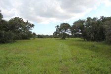 141 Acres For Sale – Francitas Ranch