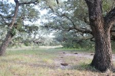 234 Acre Lavaca County Ranch For Sale