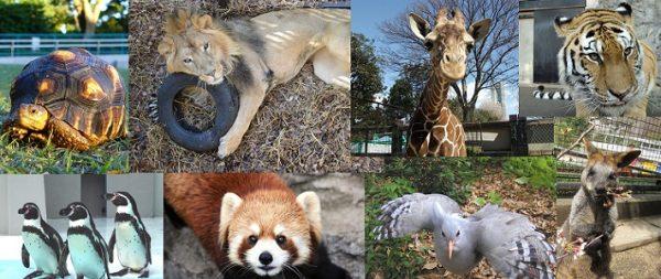 入園料が0円の動物園!あなたの地域にも、あったりして?