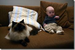 chat bébé sofa