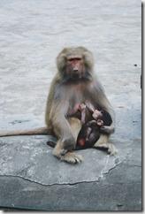 allaitement mammifaire