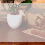 ma Little Cuisine fait un repas zen et végétarien…