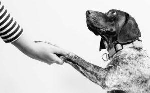 chien-mediation-animale-complicite