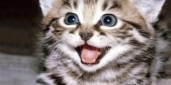 تفسير رؤية القطط في المنام