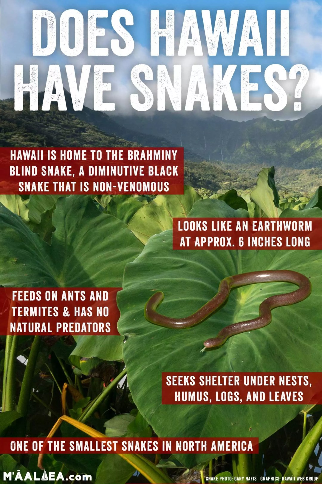 Does Hawaii have snakes?