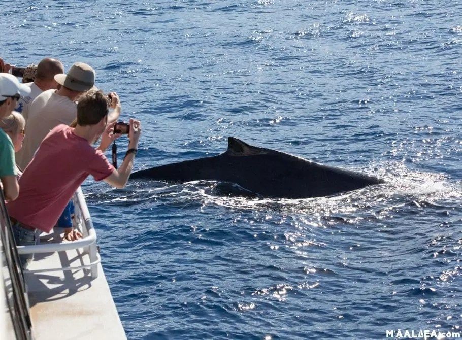 amazing whale watch
