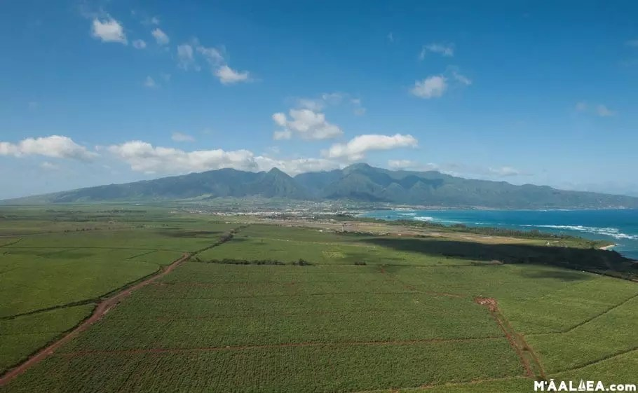 Maui sugarcane fields