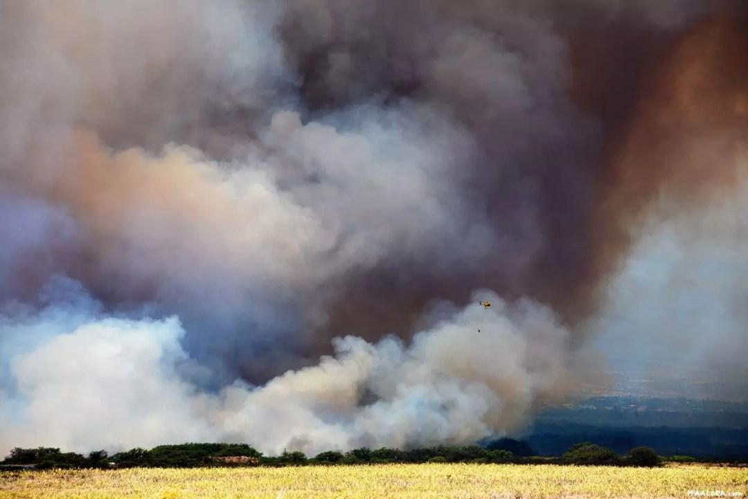 maui hawaii fires