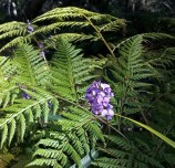 bush-flowers