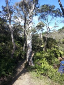 The Charles Darwin walk at Wentworth Falls, in the Blue Mountains.