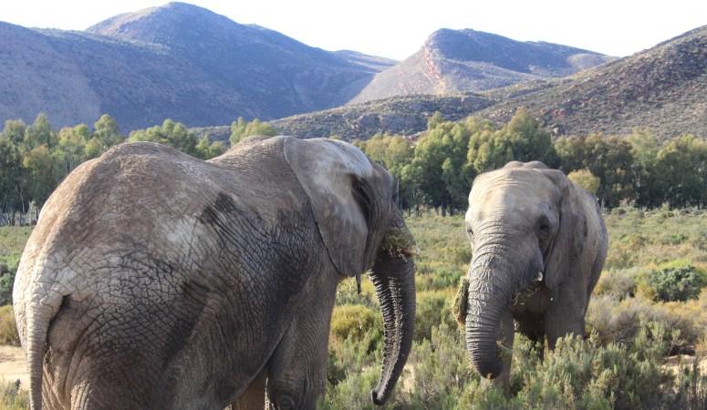 Cape Town Day 4 -Aquila Safari