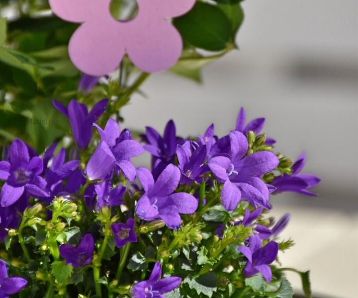 maaritse_makrotex_kesakuu_kukkia