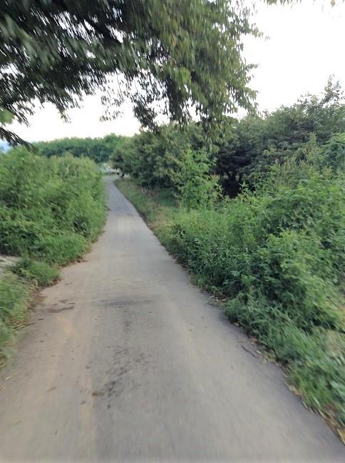 小布施SA横の堤防道路