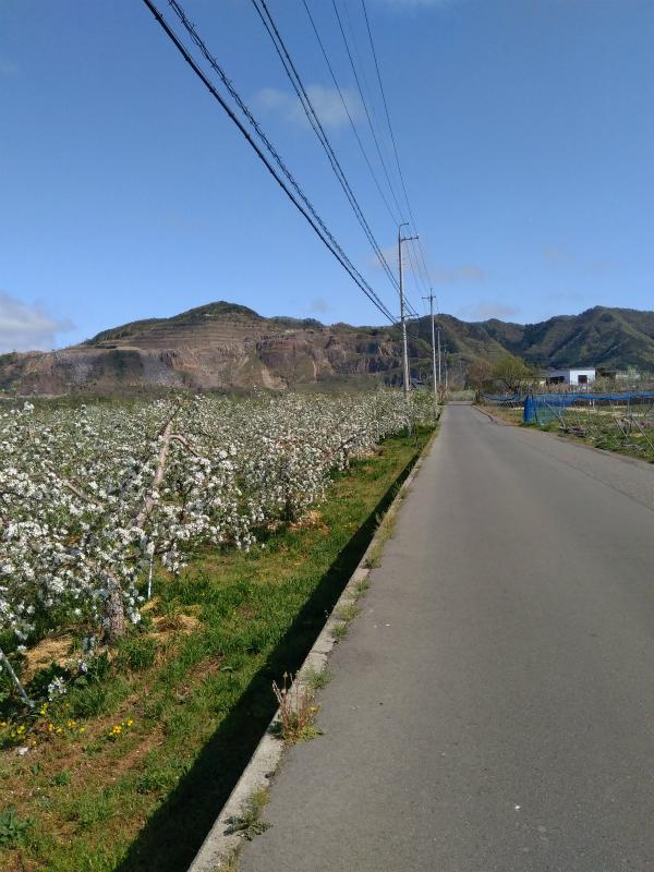 リンゴ畑サイクリング高山村
