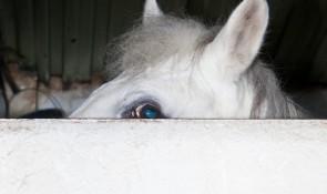 Diego diez caballo