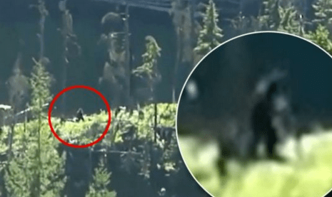 http://www.dailymail.co.uk/news/article-2380787/Hiking-couple-claim-new-footage-shows-Bigfoot-walk-wilds-Canada.html