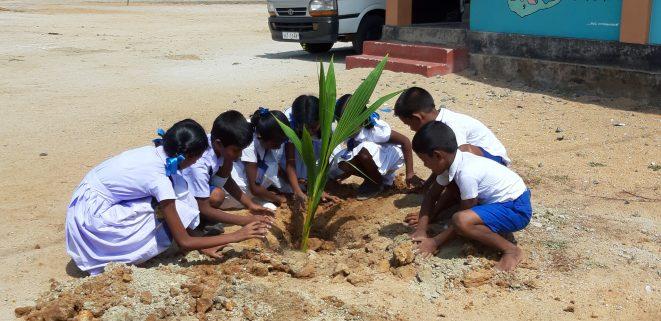 children plant