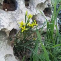 כל מיני צמחים מוצאים בית בחגווי הסלע. למשל אלה