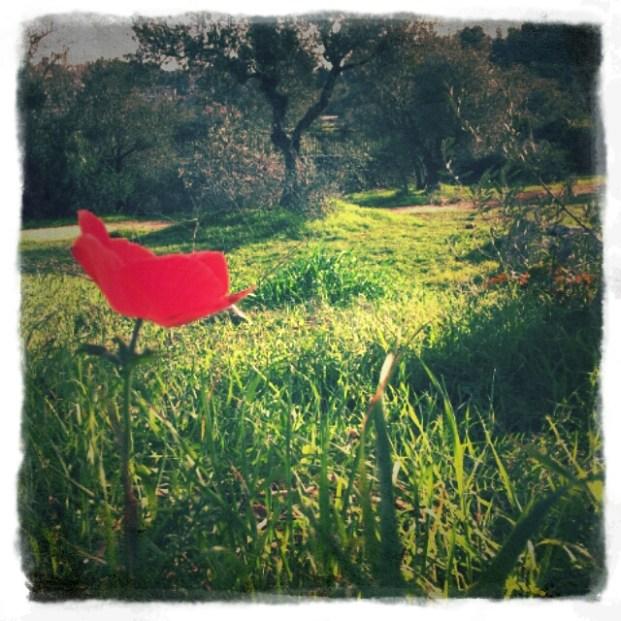 """""""...רק בתוך הדשא כלנית לוחשת: שובו בשלום ניפגש מחר."""" (הטיול הקטן, נעמי שמר)"""