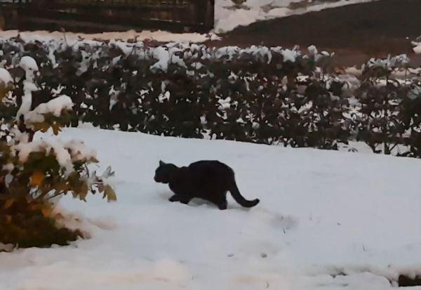 Première neige pour notre chat