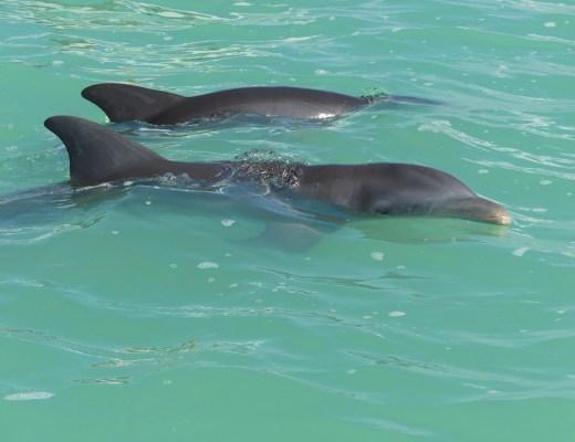 Les dauphins de la réserve naturelle de Sian Kaan
