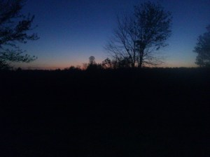 The View from My Back Door