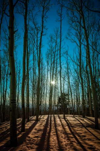Backlight Aspens I - Fine Art Photographer - Houston - Mabry Campbell