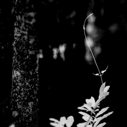 Delicate-Like-Nature-Mabry-Campbell