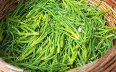 Salicorne en cuisine