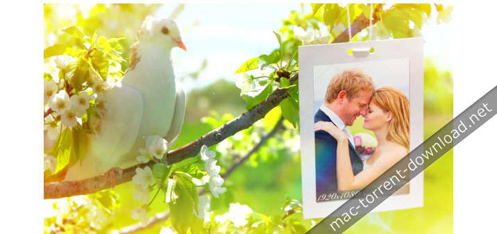 videohive_wedding_8012602