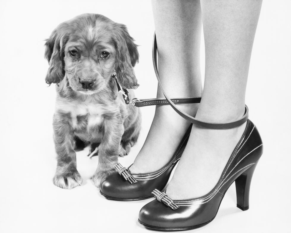 What's cuter, the puppy or these little bow pumps? (The puppy.)