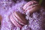 Macarons violets IMG_0314