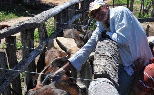 Funcionário da secretaria de agricultura realiza trabalho de vacinação