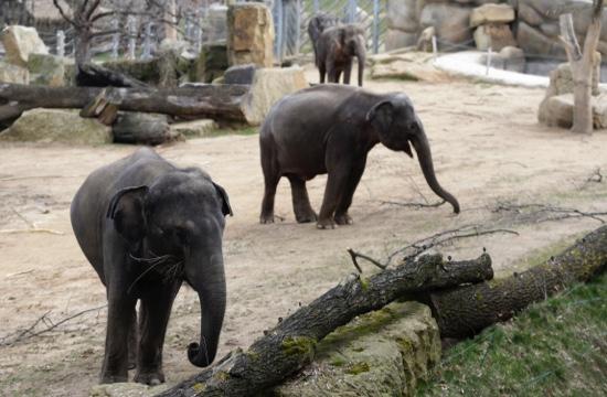 Offbeat elephant dung at prague zoo morphs into a new for Designhotel elephant prague 1 czech republic