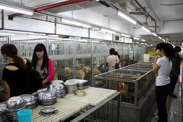 Group calls for tougher penalties for animal abuse