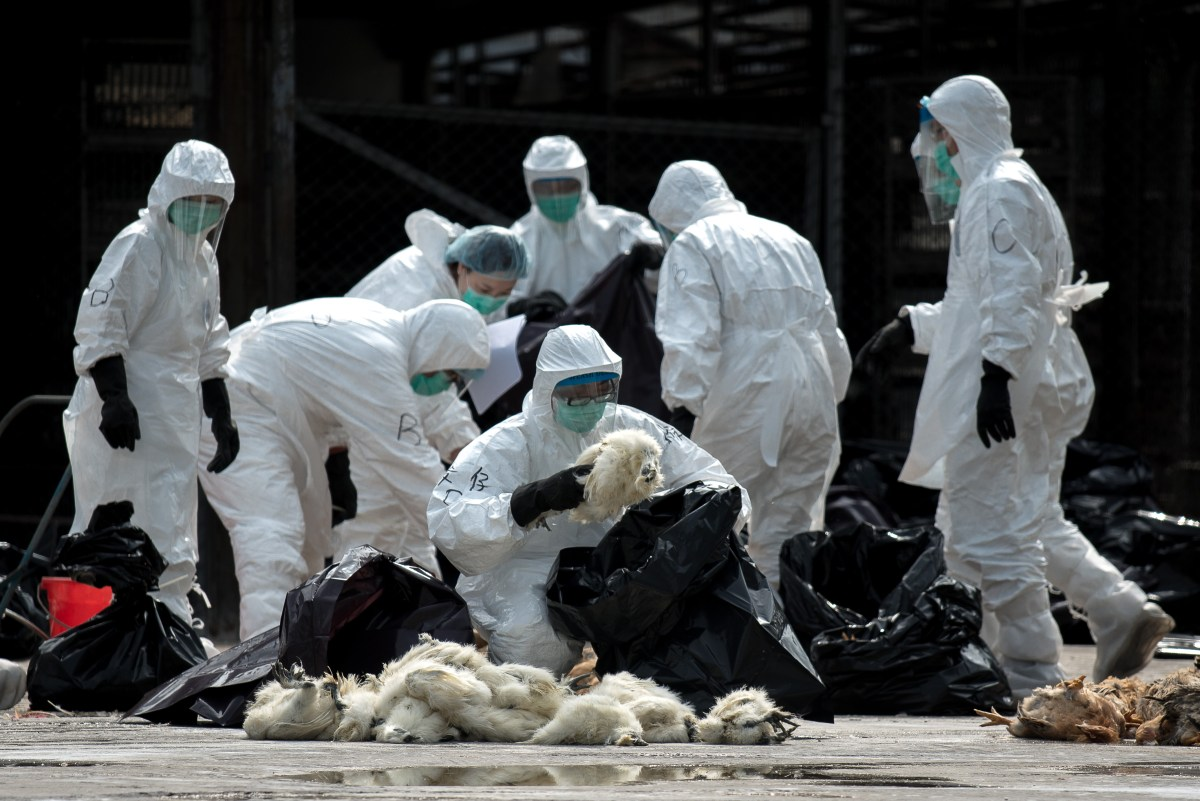 72-year-old woman tests positive for H7N9 in Macau