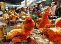 live poultry banned