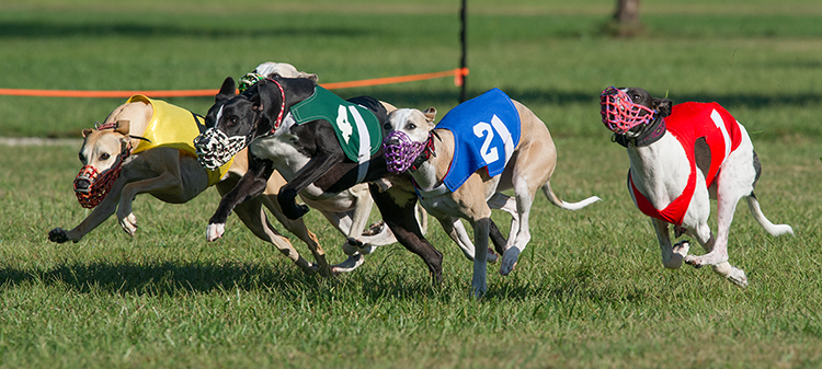 Owner given until Friday to present solution to greyhounds' fate