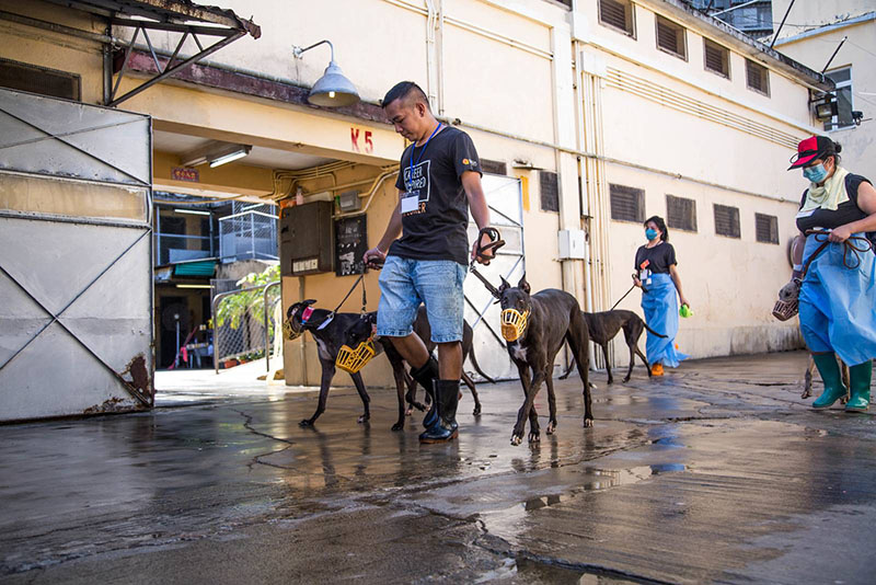 Govt to fine Yat Yuen 50,000 patacas for each 'abandoned' greyhound: IACM chief