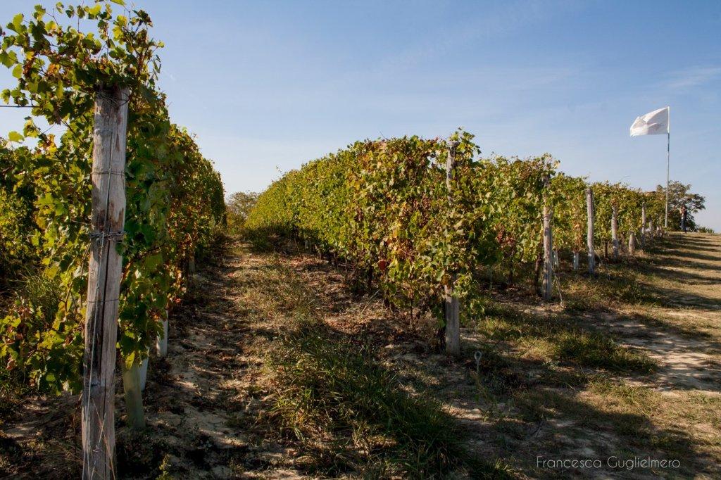 Tour nel Monferrato - Castagnole