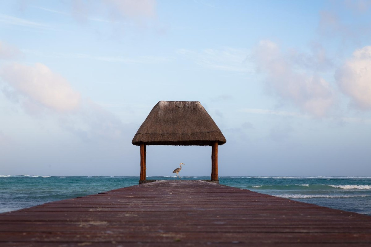 A stalk at the end of the pier in Playa del Carmen, Mexico