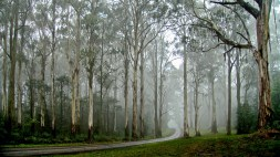 2_js_fog n trees lions head road mt macedon _