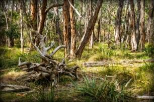 4. 2018_teawamutu_a008_nature_gone bush