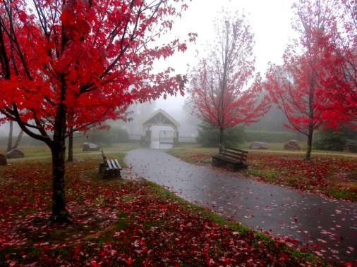 7_cc_winter leaves at mt macedon_