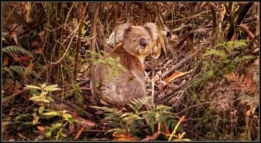 DSC08309a Ottway Koala off road Sml-4