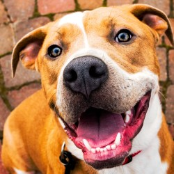 Brody, rescue dog from Montgomery County Humane Society