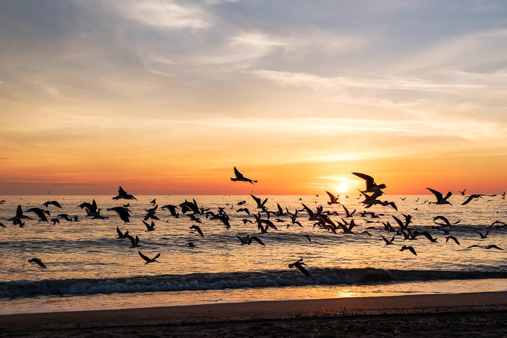 Cumberland Island – A Great Nature Escape 2